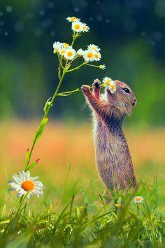 Good Morning Beautiful Gif, Good Morning Gif Images, Good Night Gif, Good Night Messages, Good Morning Flowers, Good Morning Animals, Beautiful Rose Flowers, Beautiful Flowers Pictures, Beautiful Birds