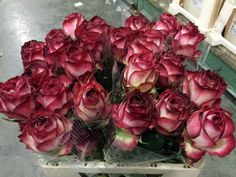 #Rose # Ecuador #Absurda  Available at www.barendsen.nl