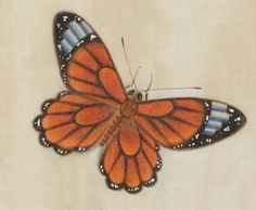 All sizes | Butterfly Album (detail) | Flickr - Photo Sharing!