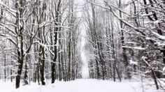 #winter #alley #snow #forest