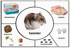 Farm Animals Preschool, Preschool Kindergarten, Math For Kids, Crafts For Kids, Hamsters, Guinea Pigs, Trees To Plant, Kids And Parenting, Kids Learning