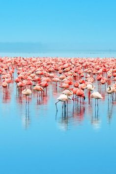 Lake Nakuru National Park is well worth a visit. It's best known for birding, and especially its flamboyant flamingos. #Kenya