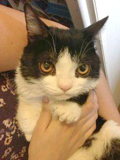 Grumpy Cat's brother Pokey photo #Pokey