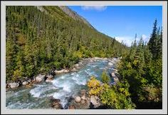 alaska gates-of-the-arctic arrigetch creek, boreal forest