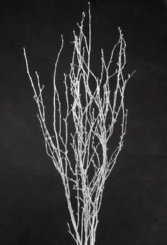 Natural Birch Branches - Silver