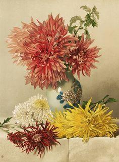 Mary Elizabeth DuffieldR.I. (1819-1914)~ Chrysanthemums, 1883