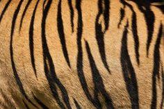 How to Make Tiger Stripe Patterns (6 Steps)