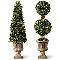 Holly Topiary