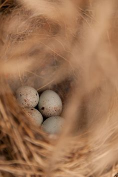 beautiful birds nest- a lovely color palette