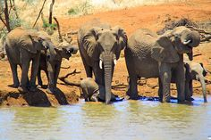 The Real Mystery of Wildlife Photography Taking Pictures, Wildlife Photography, Safari, Mystery, Elephant, Animals, Art, Art Background, Animales