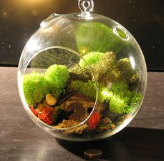 Build Your Own Hobbit Hole Terrarium.