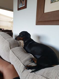12 Amazing Reasons Dachshunds Are The Cutest Dogs On The Earth - Dachshund Bonus Dachshund Breed, Dapple Dachshund, Funny Dachshund, Dachshund Love, Dachshunds, Daushund Puppies, Cute Dogs And Puppies, Weenie Dogs, Pet Dogs