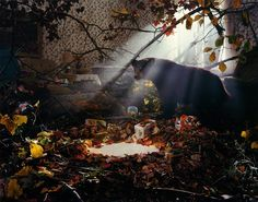 gregory crewdson - Google Search