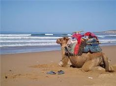 Essaouira Camel Trek, from Naturally Morocco UK