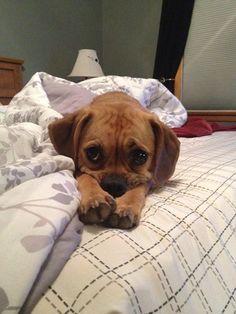 Puppy eyes..