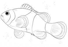 ausmalbilder fische gratis - ausmalbilder für kinder