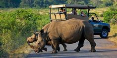 Visitors from all around the world descend on the country (South Africa) to take advantage of the stunning climate, accommodation, game reserves, natural attractions, and, of course, the huge variety of wildlife and safaries.