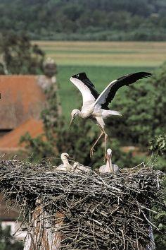 Stork nest in Poland