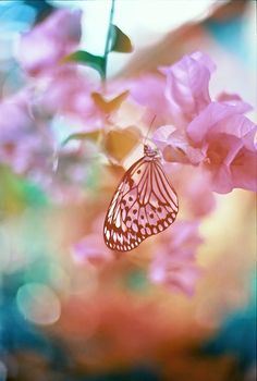 Pink butterfly. -- RESIST PINTEREST CENSORSHIP [ please spread the word if you agree ]