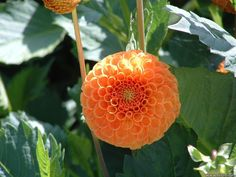 pictures of flowers in orange - Google Search