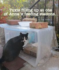 how to build shelter feral kittens