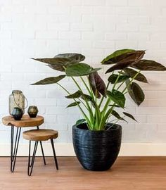 69 Ideas For Plants Interieur Table Teaching Plants, Planting For Kids, Mosquito Repelling Plants, Home Garden Design, Diy Plant Stand, Spring Plants, Interior Plants, Garden Signs, Green Plants