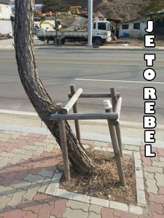"Trees Aren't a Part of Your System - Funny memes that ""GET IT"" and want you to too. Get the latest funniest memes and keep up what is going on in the meme-o-sphere. Funny Cute, The Funny, Hilarious, Super Funny, Haha, Frases Humor, One Job, History Memes, Funny History"