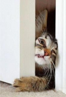 """""""Almost made it.""""   This looks like something my cat would do."""