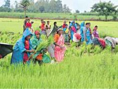 2014 farm output at risk, CPI to spike again  For More details: http://www.agribazaar.co/index.php?page=item&id=2426