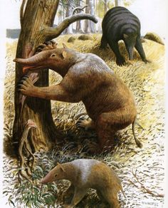Prehistoric Marsupials