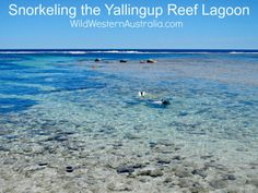 The Yallingup Reef lagoon at the southern end of Yallingup Beach is sheltered and calm and thriving with marine life!