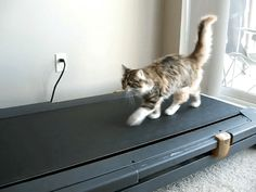 13 New Years Resolution For Your Cat     [9]. Do more workout on the treadmill that humans never use.