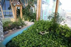 Phoenix Earthship Tilapia pond would totally want to do this in my earthship