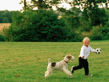 Pin On Pet Exercise And Fitness Tips