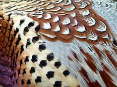 Pheasant plumage by Judith*Green, via Flickr