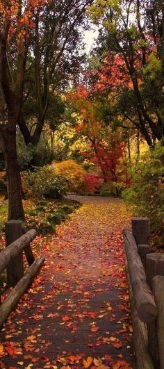 Fall Pictures, Nature Pictures, Autumn Photography, Travel Photography, Beautiful World, Beautiful Places, Autumn Tale, Autumn Scenes, Seasons Of The Year