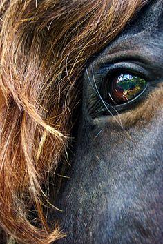 Eye Equine