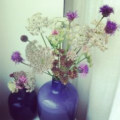 Gallery - Harpers Bloom