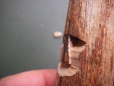 Wood Spirit Carving Tutorial (very pic heavy)