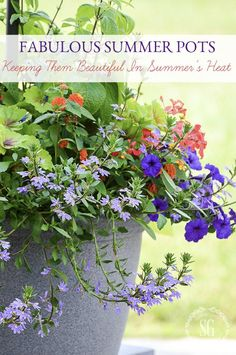 FABULOUS SUMMER POTS… HOW TO KEEP THEM BEAUTIFUL IN SUMMER HEAT!