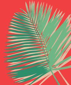 this is atom palm // allison holdridge www.allisonholdridge.com
