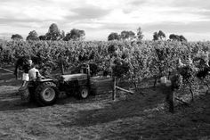 Clearview Estate is proud to share a collection of small-lot wines from the Te Awanga coastal region of Hawke's Bay. Wineries, Vineyard, Coastal, Monster Trucks, Tours, Restaurant, Gallery, Wine Cellars, Roof Rack