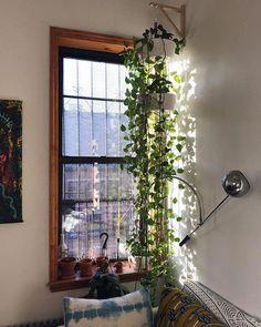 Living Room Plants, House Plants Decor, Bedroom Plants, Bedroom Decor, Living Rooms, Plant Rooms, Plants For Bathroom, House Plants Hanging, Hanging Herb Gardens