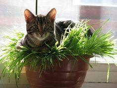 Katinėlis pievoje
