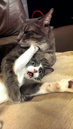 Cats and kittens are so funny and cute animals, they are simply the best! Just look how all these cats & kittens play, fail, get along with dogs, get their Animal Humour, Funny Animal Memes, Cute Funny Animals, Funny Animal Pictures, Funny Cute, Funny Memes, Funniest Animals, Funny Cat Quotes, Lol Funny