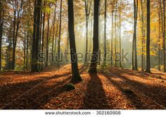 Autumn forest in north Poland.Pomerania province/Rays of light