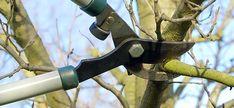 Jabloně patří mezi nejoblíbenější a nejvděčnější ovocné stromy. Hrušně se dnes pěstují méně často, ale i ony poskytují jedinečné ovoce. Jak jádroviny prořezávat, aby dobře plodily a prospívaly po mnoho let? Pruning Shears, Garden Tools, Outdoor Decor, Gardening, Yard Tools, Garten, Outdoor Power Equipment, Lawn And Garden