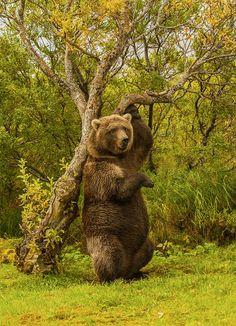 Bear at the Katmai National Park, Alaska photo by Jim James