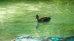 Parcul National Plitvice, Croatia    Vezi mai multe poze pe www.ghiduri-turistice.info Animals, Park, Animales, Animaux, Animal, Animais