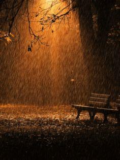 Rain on a park bench